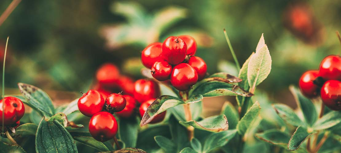 THE WILD HERITAGE: COMMON WILD FOODS FOUND WHEREVER YOU GO