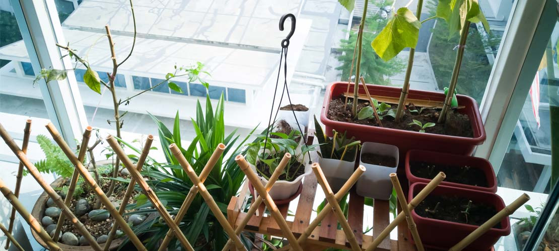 SMALL SPACE AND APARTMENT GARDENING