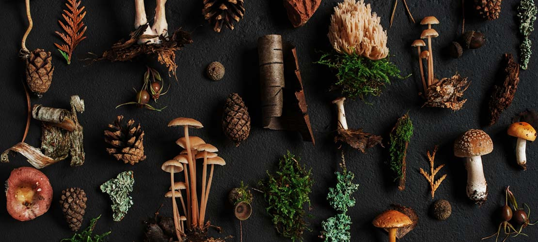 SURVIVAL FORAGING FOR WILD FOODS